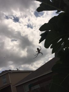 San Antonio Pest Control Services